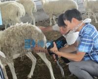 邯郸市临漳县四和肉羊养殖基地产品培训