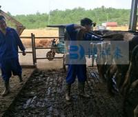 江华温氏乳业有限公司进口牛用B超培训现场