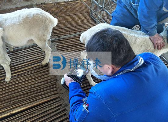 新乡市辉县市鑫垚农场羊用B超BXL-M2检测现场